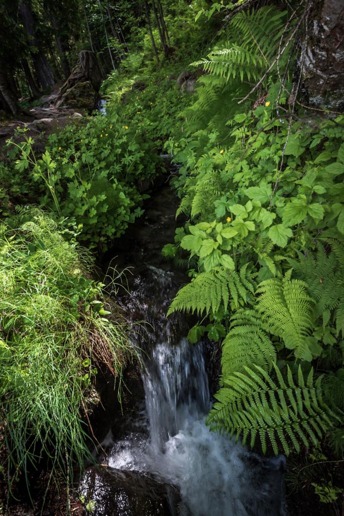 Wasserlauf mit Farn im Wald